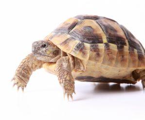 REPCO Wildlife Encounters – Virtual Program June 25-July 2