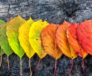 Click for Fall Program video Promo